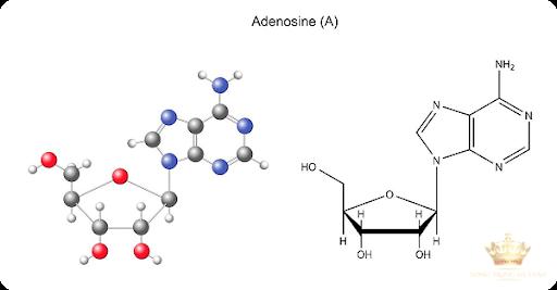 Adenosine - ngôi sao mới trong ngành mỹ phẩm